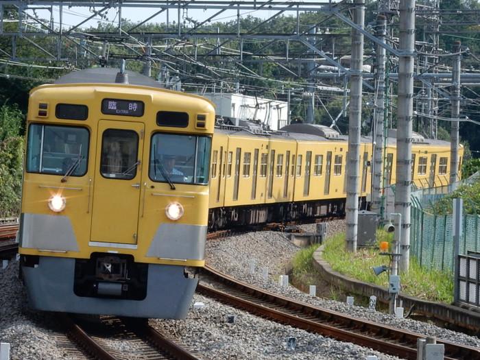 Rscn8006